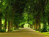 Sidewalk Walking Pavement In Park. Nature Landscape.