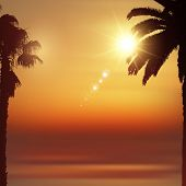 Summer background with silhouettes of palm trees