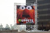 Disney Muppets Most Wanted In Theatres March 21 Billboard On Hollywood Boulevard Featuring A Photo O