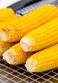 Fresh Golden Yellow Corn Roasted On A Grill.