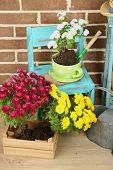 image of plant pot  - Flowers in pot on chair - JPG
