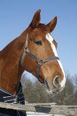 Portrait Of A Nice Purebred Horse Winter Corral Rural Scene