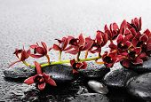 Lying down red branch orchid with wed stones in drops of water