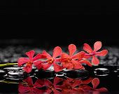 branch red orchid with therapy stones