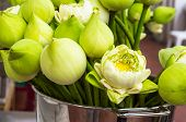 picture of respect  - Lotus flower for buddhist people to respect - JPG