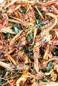 Pile Of Fried Grasshopper.