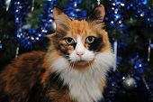 Calico Cat In Front Of A Decorated Christmas Tree