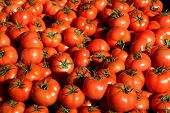 stock photo of glorious  - Perfectly ripe and gloriously red a large display of freshly harvested tomatoes on a Greek Market stall - JPG