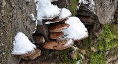 look for mushrooms on the tree in winter