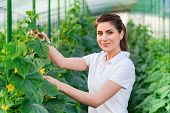 pic of cucumber  - Happy Young woman holding and eating cucumbers in a hothouse cultivated with green fresh cucumber plants - JPG
