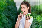 picture of cucumber  - Happy Young woman holding and eating cucumbers in a hothouse cultivated with green fresh cucumber plants - JPG