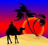 pic of camel  - Silhouette of the cameleer in the desert at sunset - JPG