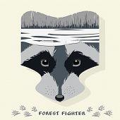 picture of raccoon  - Vector illustration of cartoon raccoon - JPG