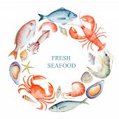 picture of shell-fishes  - Watercolor set of seafood from lobster crab fish squid octopus shrimp shells on a white background for your menu or design vector illustration - JPG