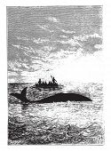 Постер, плакат: The whale stood one cable vintage engraved illustration Jules Verne a 15 year old captain
