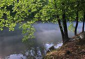Foggy River