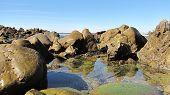 Corona Del Mar Tidepools 3