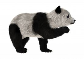 picture of panda bear  - 3D digital render of a panda bear cub isolated on white background - JPG