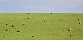 picture of haystacks  - Beautiful green field with haystacks - JPG