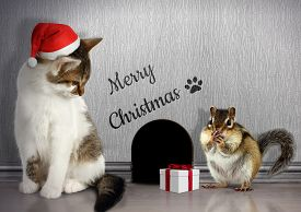 stock photo of laughable  - Christmas congratulate concept Funny cat dressed santa hat and gift - JPG