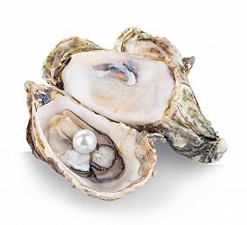 foto of pearl-oyster  - Oyster with pearls isolated on white background - JPG