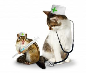 image of laughable  - Vet concept funny doctor chipmunk and cat with phonendoscope and syringe on white - JPG