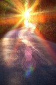 Curving Country Road Through Thick Forest poster