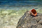 Empty Shell On Sea Rock