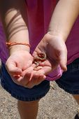 Little Girl Playing With Worm