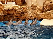 Peforming Dolphins