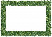 Variegated Philodendron frame. From The Floral Frames series