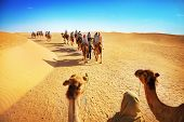 foto of dromedaries  - Landscape with people in the Sahara desert  - JPG