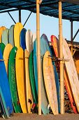 Set Of Colorful Surfboard For Rent On The Beach. Multicolored Surf Boards Different Sizes And Colors poster