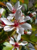 Pretty Bloom Up Close