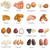 Nut Types With Signed Names Mockup Set. Realistic Illustration Of 16 Nut Types With Signed Names Moc poster