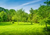 Backyard And Garden With Manu Trees And Grass On Lawn poster