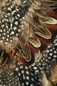 Abstract Background From Brown Feathers