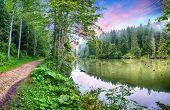 Majestic Summer View Of Mountain Lake Lacul Rosu Or Red Lake Or Killer Lake. Rotten Tree Trunks. Log poster