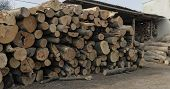 Timber Logging. Freshly Cut Tree Wooden Logs Piled Up. Wood Storage For Industry. poster