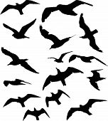 stock photo of flock seagulls  - a large number of various seagulls silhouettes - JPG