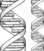stock photo of pyrimidines  - Doodle style DNA double helix seamless vector background or border - JPG