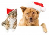 stock photo of dog christmas  - Cat and Dog with red hats above white banner - JPG