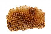 Closeup of a section of Honeycomb isolated on a white background.