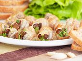 image of escargot  - Tasty prepared escargot on the table in kitchen - JPG