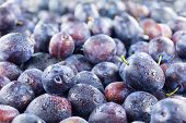 image of plum fruit  - Full frame image of a large group of fresh plums - JPG