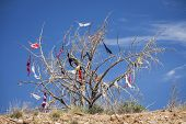 image of oddities  - Dead tree covered in bras hung by travelers passing by Utah - JPG