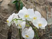 Exotic orchids growing on island Bali