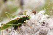 Green grasshopper - food intake