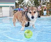 a dog having fun at a swimming pool