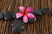 Rd frangipani flower and spa stones on mat